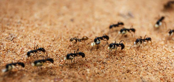 ant control pest control services