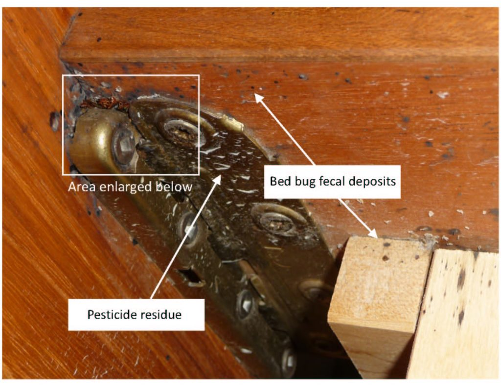 How to Get Rid of Bed Bugs - pest control vancouver