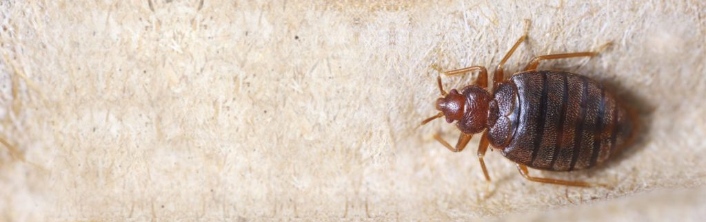 Pest Control Services - Bed Bug Control