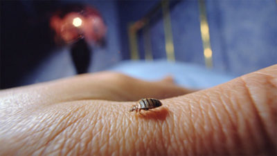 bed-bugs-how-to-get-rid-of-them